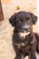 adoptado Inka